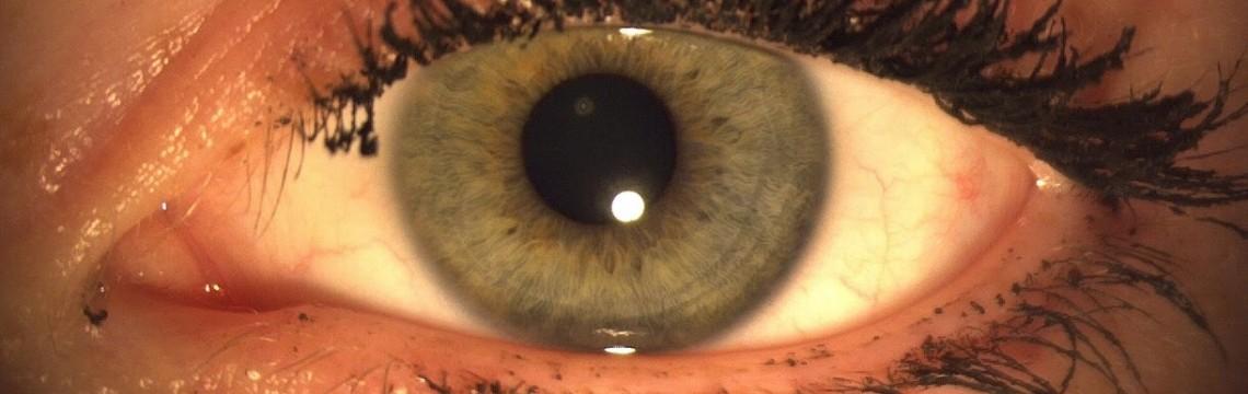 Das Auge -  - das Tor zur sichtbaren Welt